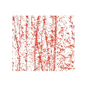 Red Frit, Red Streamers